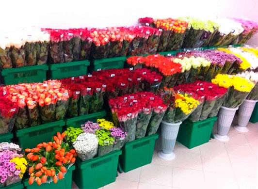розы как бизнес