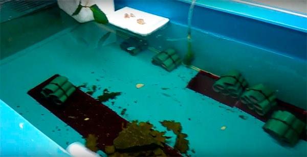 разведение раков в бассейне